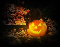 halloween by glitchHP