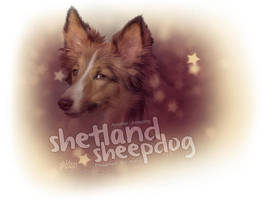 Sheltie Ikaria by glitchHP