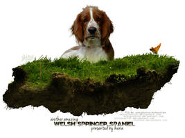 welsh springer spaniel by glitchHP