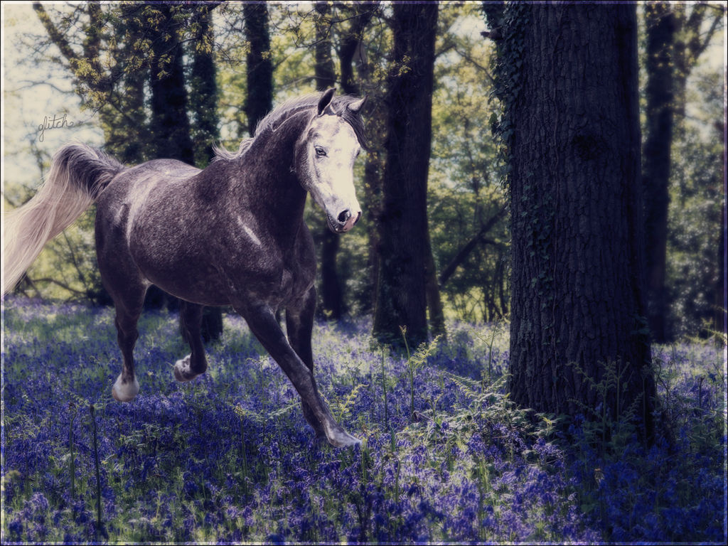 Bluebells by glitchHP