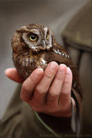 Owl by WinterChild7