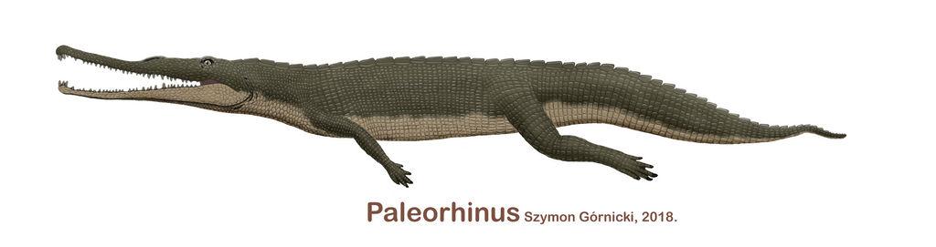 Paleorhinus 2018 by Szymoonio