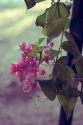 Beautiful Flowers by Einas-A