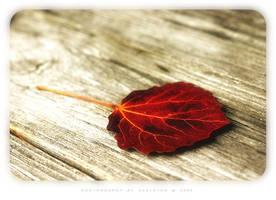 autumn magick by zkeleton