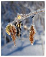 winter impression iii by zkeleton