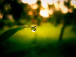 Dew Drop by sufined