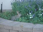 Rabbit Stock 3 by AshenSorrow