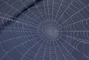 Spider Web by AshenSorrow