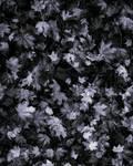 Leaf Texture 1 by AshenSorrow