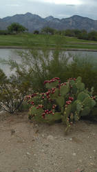 Tucson AZ Stock 37 by AshenSorrow