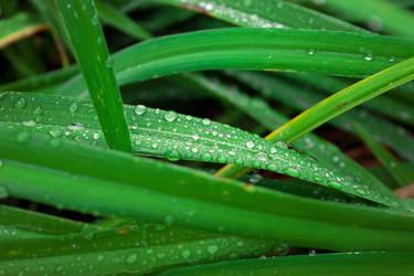 Raindrops by rockdog80