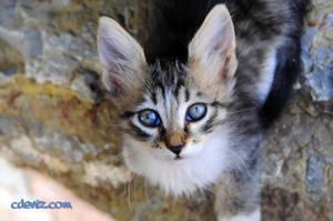 cat51 by resimdekileke