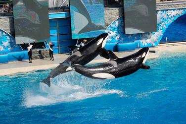 Whales and Shamu? by AnimeAngel313