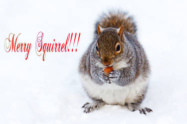 Merry Squirrel by SquirrelsAreGood