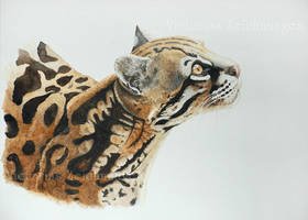 Ozelot watercolor by LittleMissRaven