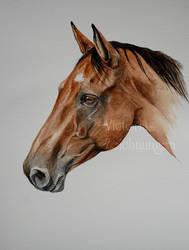 A horse again by LittleMissRaven