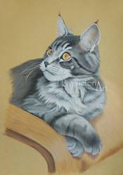 Maine Coon Kitten Thabo by LittleMissRaven
