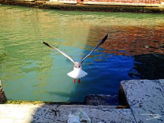 +Venice.Flight+ by ViViTheDaRk