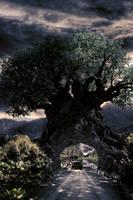 The Tree of Life by Draidum