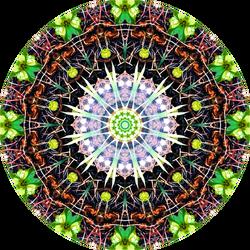 mandala - War of Germs by eaposztrof