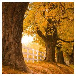 October Daze by DennisChunga