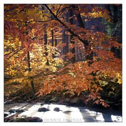Autumn Colors by DennisChunga