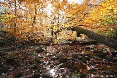 Autumn Ending by DennisChunga