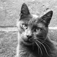 Cat series, I by seredream
