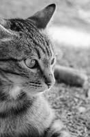 Cat series, VI by seredream