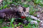 kitten series, IV by seredream