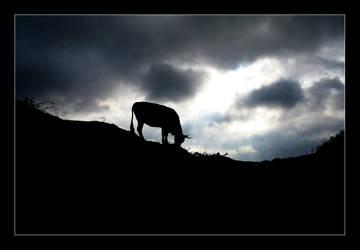 Vaca by veritax