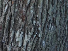 bark texture2 by akinna-stock