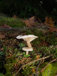 Mushrooms 02 by akinna-stock