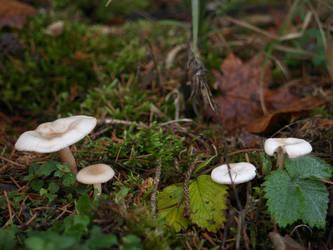 Mushroom 03 by akinna-stock