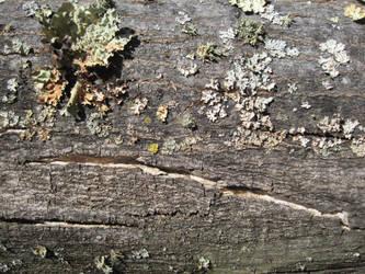 Mossy wood v2 by xenabrat