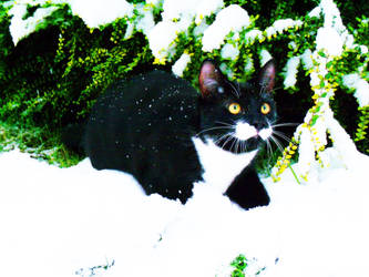 Snow Cat by Coffeejock