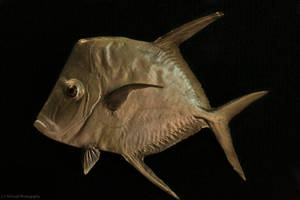 Fish 10 by NHuval-stock