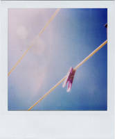 Clothes Peg Polaroid by viewfinder