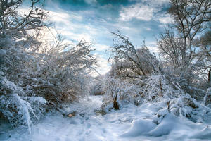 Blue_snow by DimNevermind
