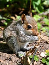 baby squirrel 2010 by mercurialfox