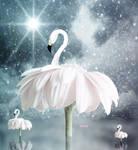Ballet by illicita