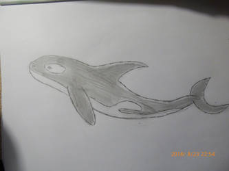 Orca by balint2002