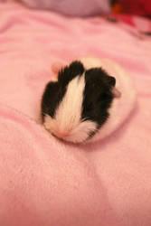 Baby Piggie by dumboxxx