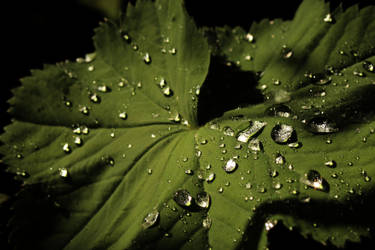 Water drops by Maddie-Marie