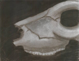 Darkened Skull by Panda-Boi