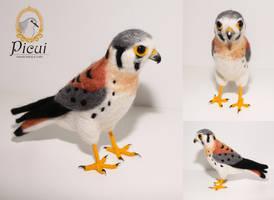 American Kestrel (Falco sparverius) by PicuiDove