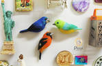 Three Northern Argentine Bird Magnets by PicuiDove