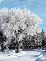 hoar frost 1 by Handie