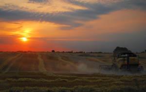 Harvesting the Sun by Handie