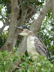 LOLbird by Akril15